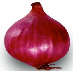 Oignon violet