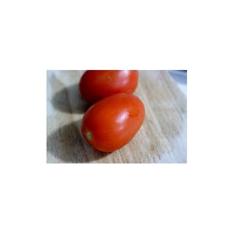 Tomate européenne